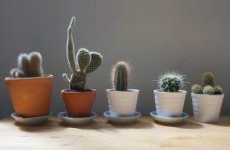 planten in leven houden