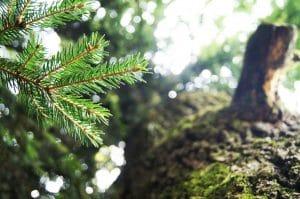 kersttrend natuurlijk botanisch naaldboom