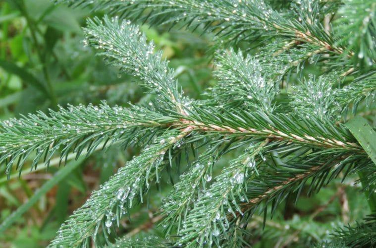 kerstboom recyclen hergebruiken tips