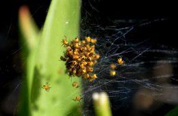Hoe houd je spinnen buiten je huis - Hierisalleswonen.nl