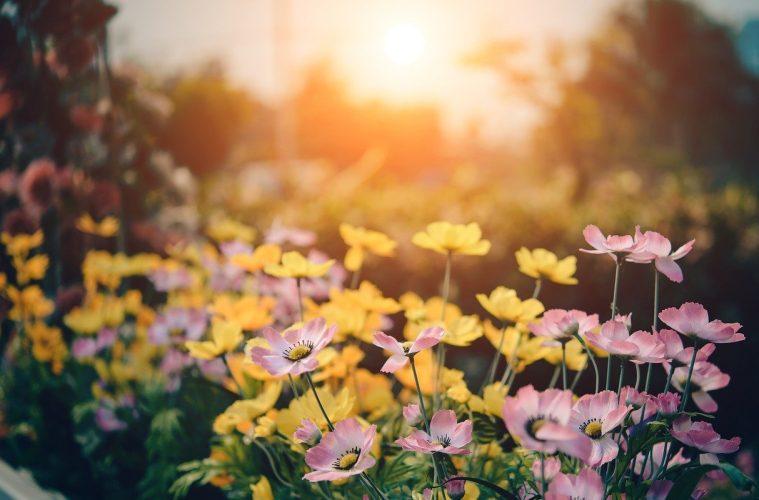 Hoe leg je een japanse tuin aan - Hierisalleswonen.nl